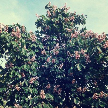 praga zwiedzanie miasta wiosna w pradze maj majówka